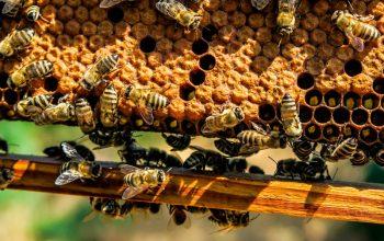comunidades de Chiguayante en agricultura y apicultura urbana
