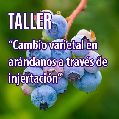 TALLER DE INJERTACIÓN PARA CAMBIO VARIETAL EN ARÁNDANOS