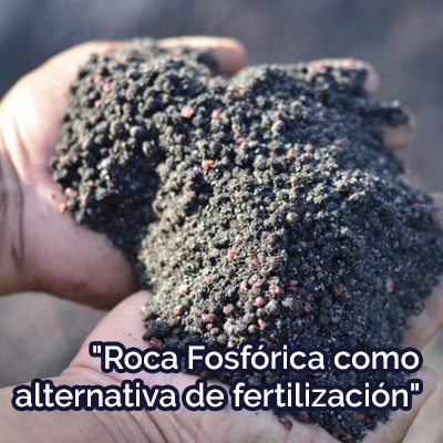 ROCA FOSFÓRICA COMO ALTERNATIVA DE FERTILIZACIÓN