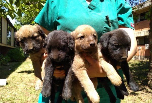 Perrita abandonada dio a luz ocho cachorros en dependencias de nuestra Facultad